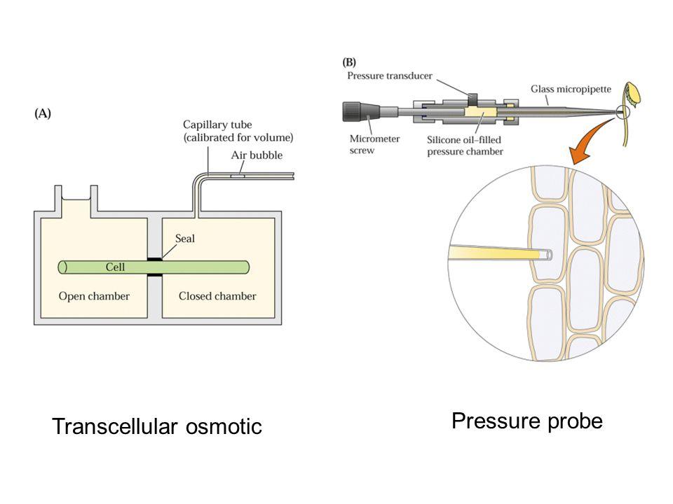 Transcellular osmotic Pressure probe