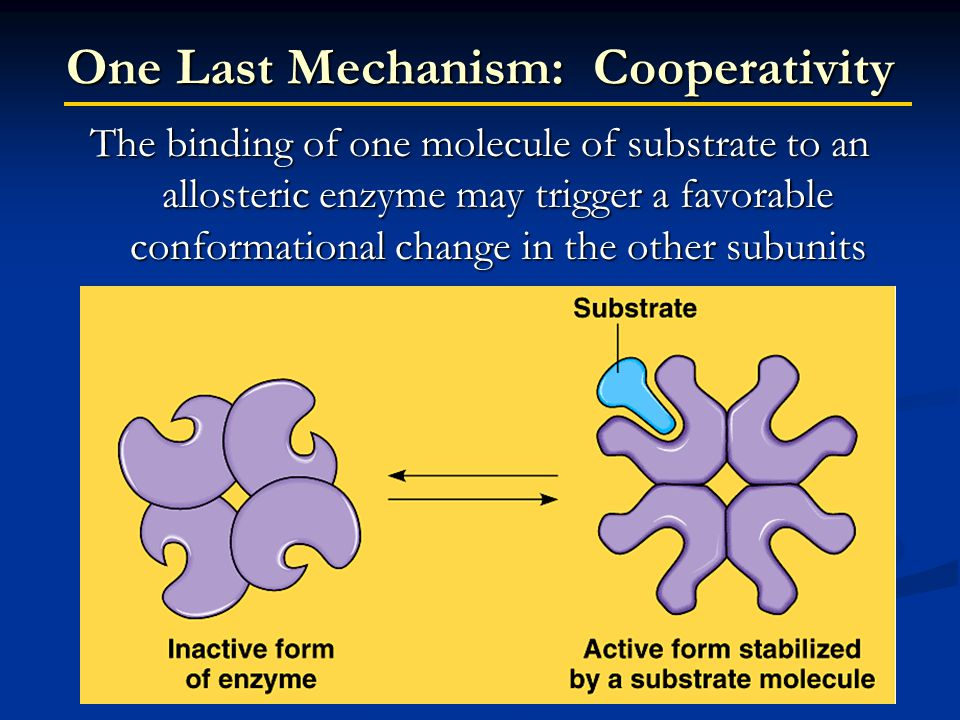 One Last Mechanism: Cooperativity The binding of one molecule of substrate to an allosteric enzyme may trigger a favorable conformational change in the other subunits