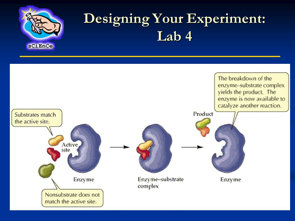Designing Your Experiment: Lab 4