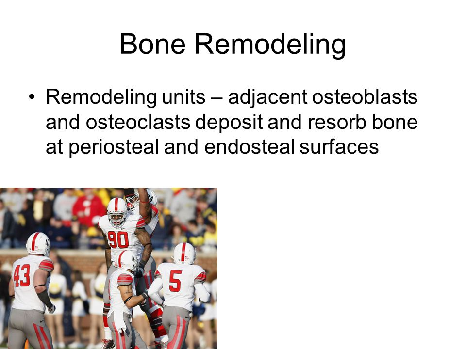 Bone Remodeling Remodeling units – adjacent osteoblasts and osteoclasts deposit and resorb bone at periosteal and endosteal surfaces