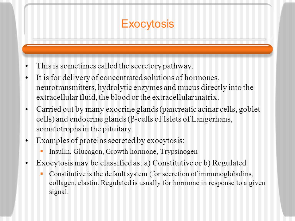 Exocytosis This is sometimes called the secretory pathway.