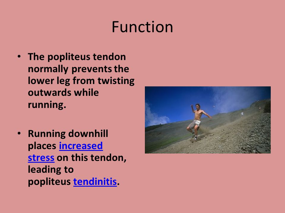 Function The popliteus tendon normally prevents the lower leg from twisting outwards while running. Running downhill places increased stress on this t