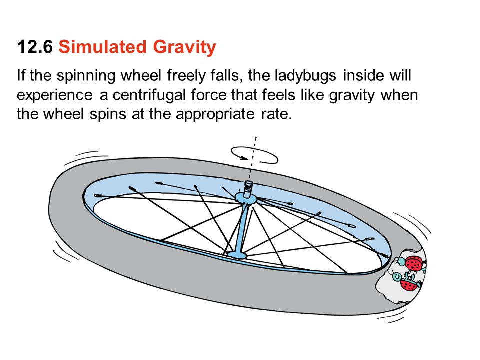 If the spinning wheel freely falls, the ladybugs inside will experience a centrifugal force that feels like gravity when the wheel spins at the appropriate rate.