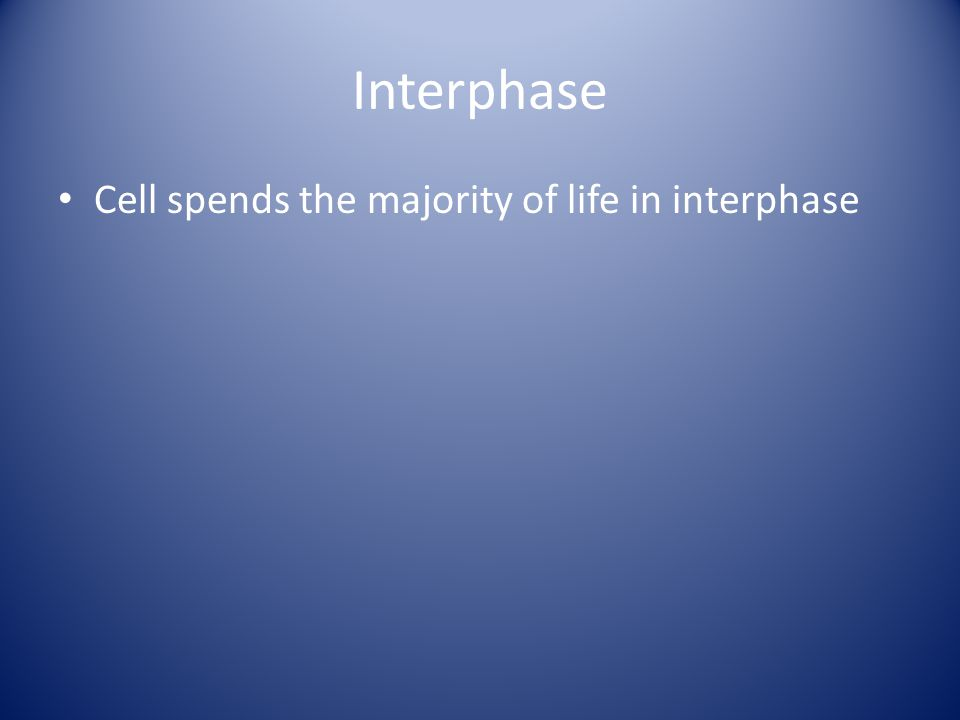Interphase Cell spends the majority of life in interphase