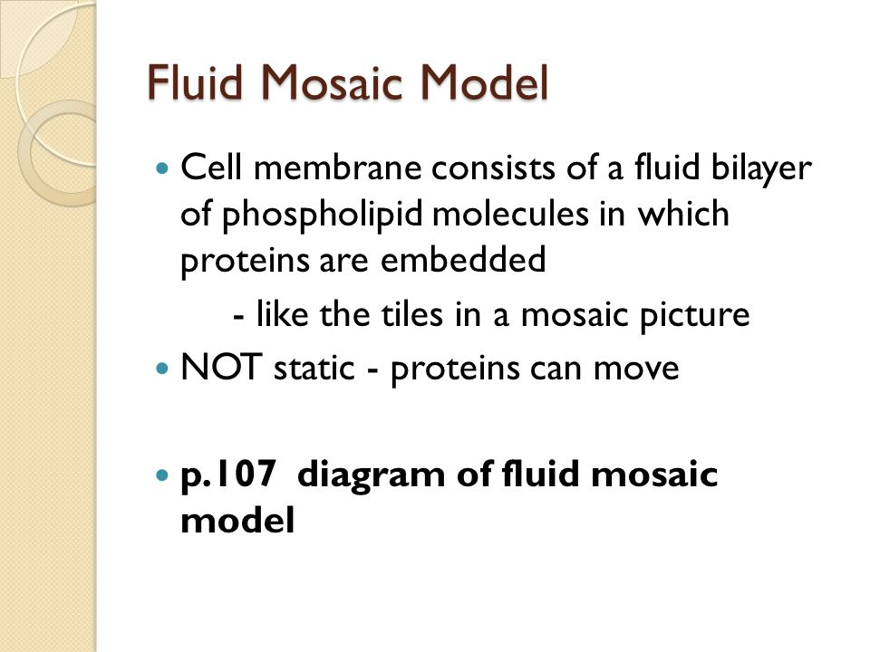 Fluid Mosaic Model Cell membrane consists of a fluid bilayer of phospholipid molecules in which proteins are embedded - like the tiles in a mosaic pic