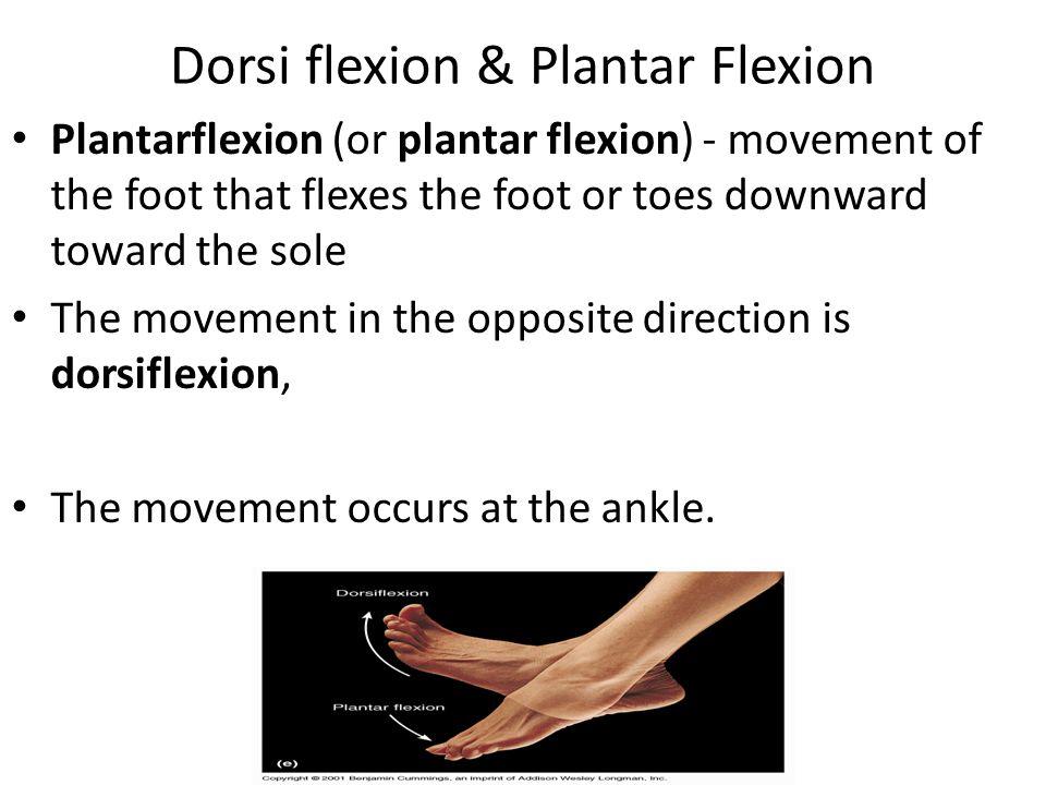 Dorsi flexion & Plantar Flexion Plantarflexion (or plantar flexion) - movement of the foot that flexes the foot or toes downward toward the sole The m