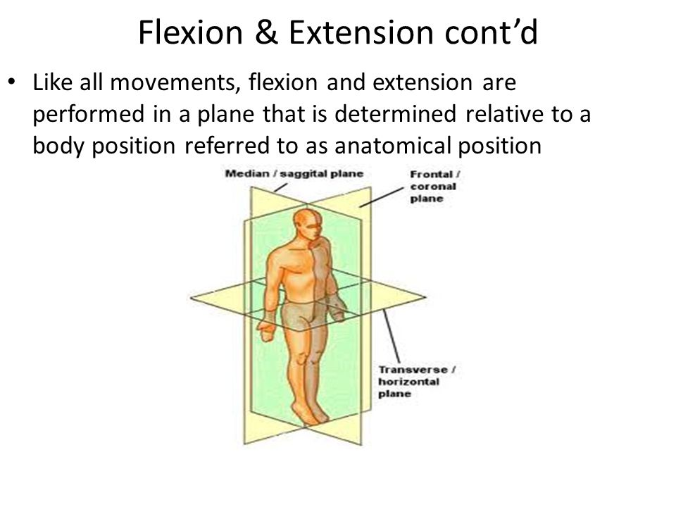 Flexion & Extension cont'd Like all movements, flexion and extension are performed in a plane that is determined relative to a body position referred