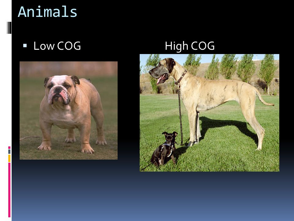 Animals  Low COG High COG