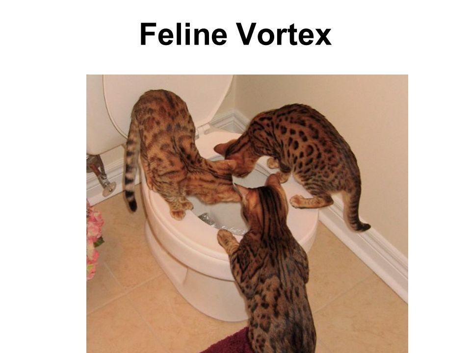 Feline Vortex