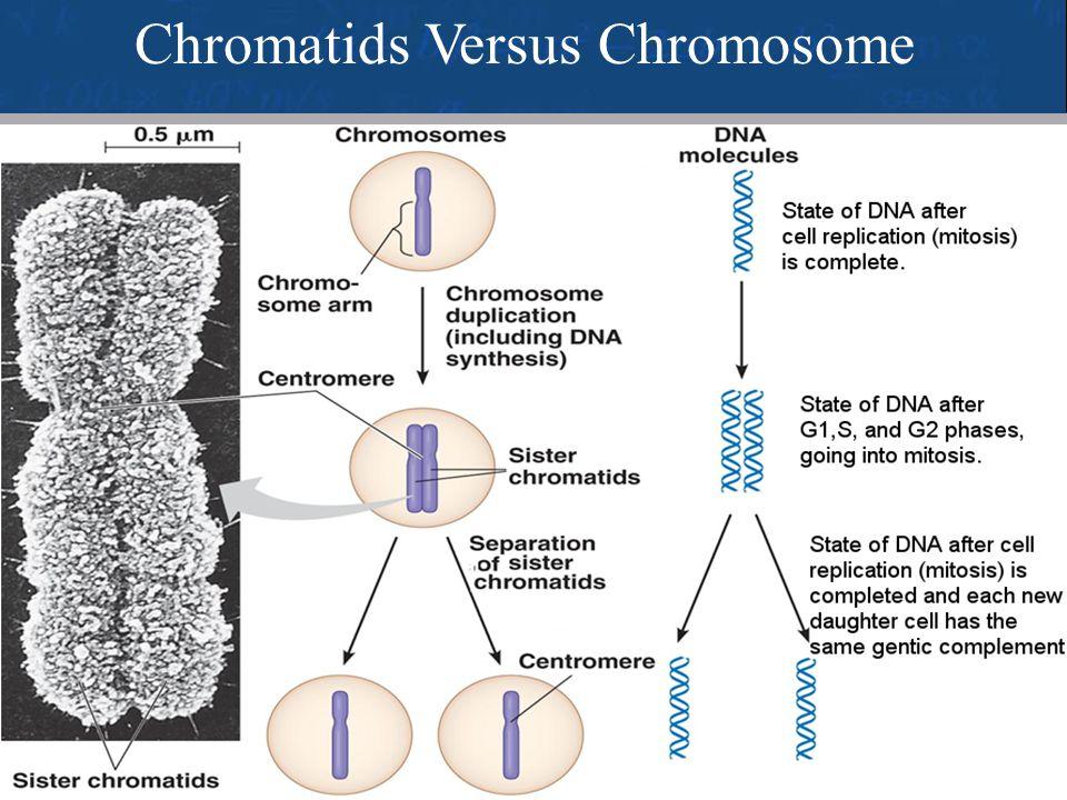 9 Centromere vs. Kinetochore