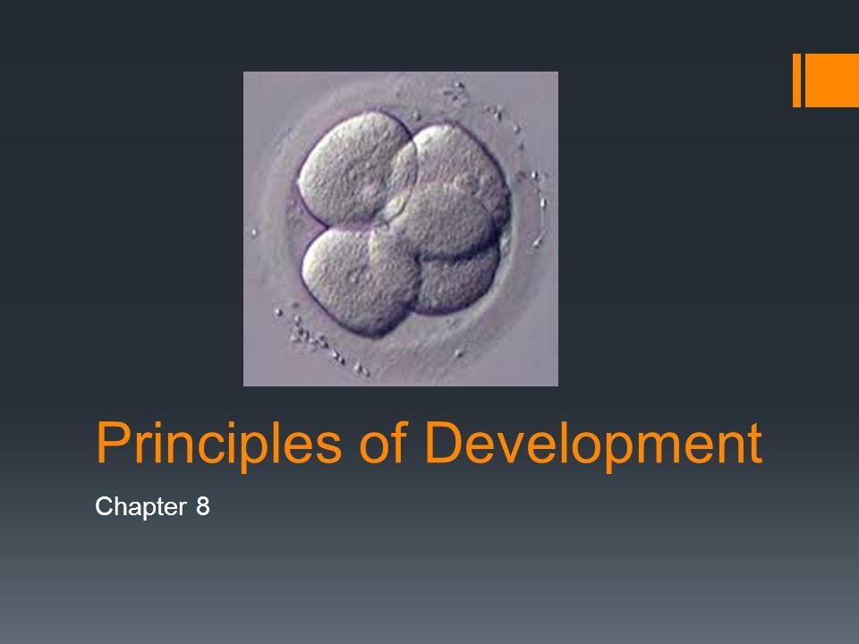 Principles of Development Chapter 8