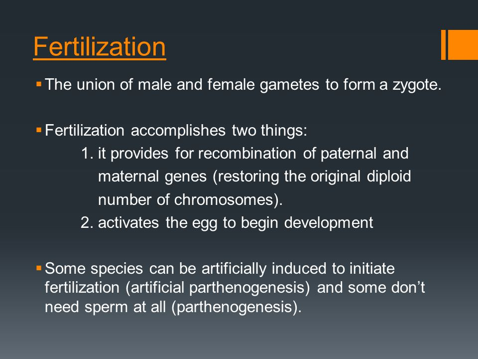 Fertilization  The union of male and female gametes to form a zygote.  Fertilization accomplishes two things: 1. it provides for recombination of pa