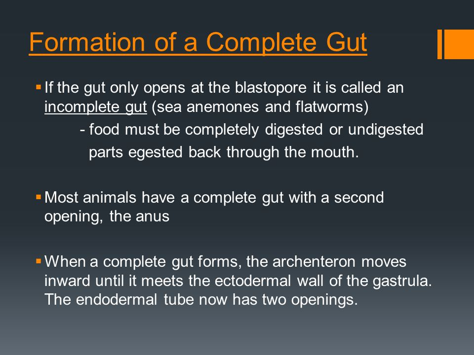 Formation of a Complete Gut  If the gut only opens at the blastopore it is called an incomplete gut (sea anemones and flatworms) - food must be completely digested or undigested parts egested back through the mouth.