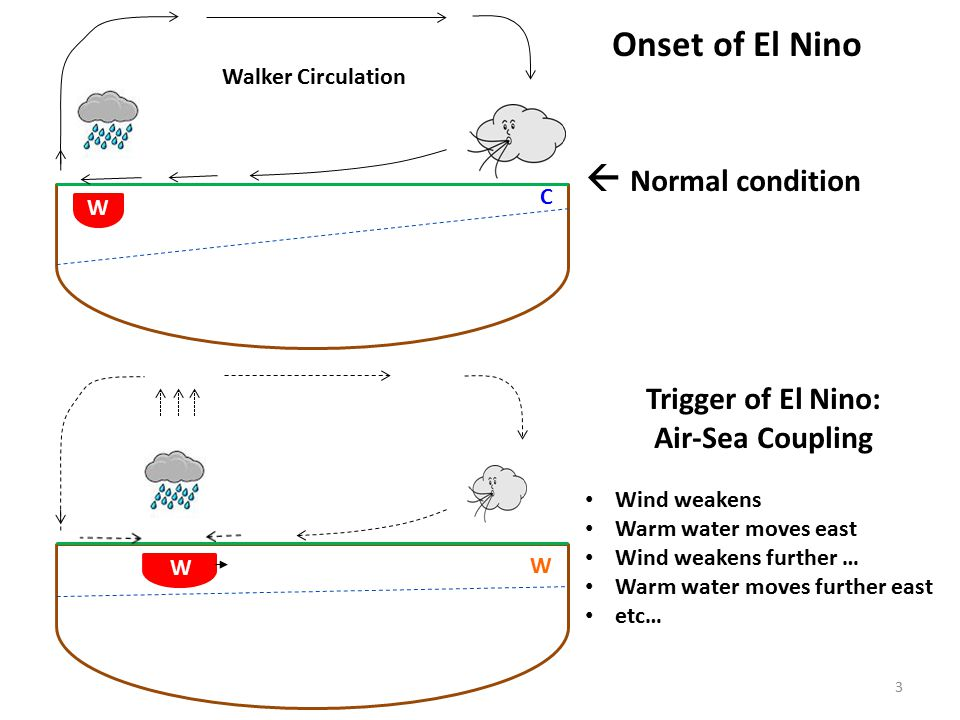 C W W W Onset of El Nino  Normal condition Trigger of El Nino: Air-Sea Coupling Wind weakens Warm water moves east Wind weakens further … Warm water moves further east etc… Walker Circulation 3