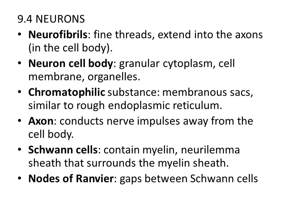 9.4 NEURONS Neurofibrils: fine threads, extend into the axons (in the cell body). Neuron cell body: granular cytoplasm, cell membrane, organelles. Chr