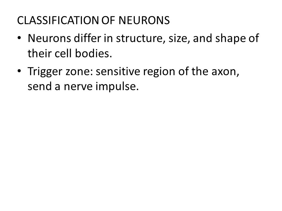 CLASSIFICATION OF NEURONS Neurons differ in structure, size, and shape of their cell bodies. Trigger zone: sensitive region of the axon, send a nerve