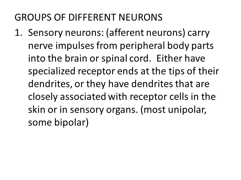 GROUPS OF DIFFERENT NEURONS 1.Sensory neurons: (afferent neurons) carry nerve impulses from peripheral body parts into the brain or spinal cord. Eithe