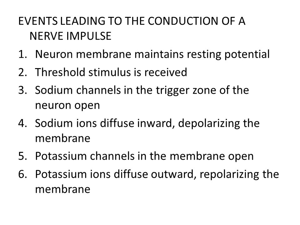 EVENTS LEADING TO THE CONDUCTION OF A NERVE IMPULSE 1.Neuron membrane maintains resting potential 2.Threshold stimulus is received 3.Sodium channels i