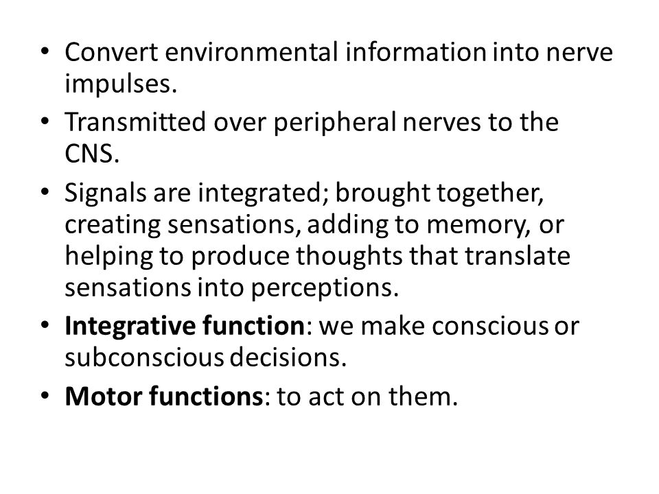Effectors: carry impulses from the CNS to responsive structures.