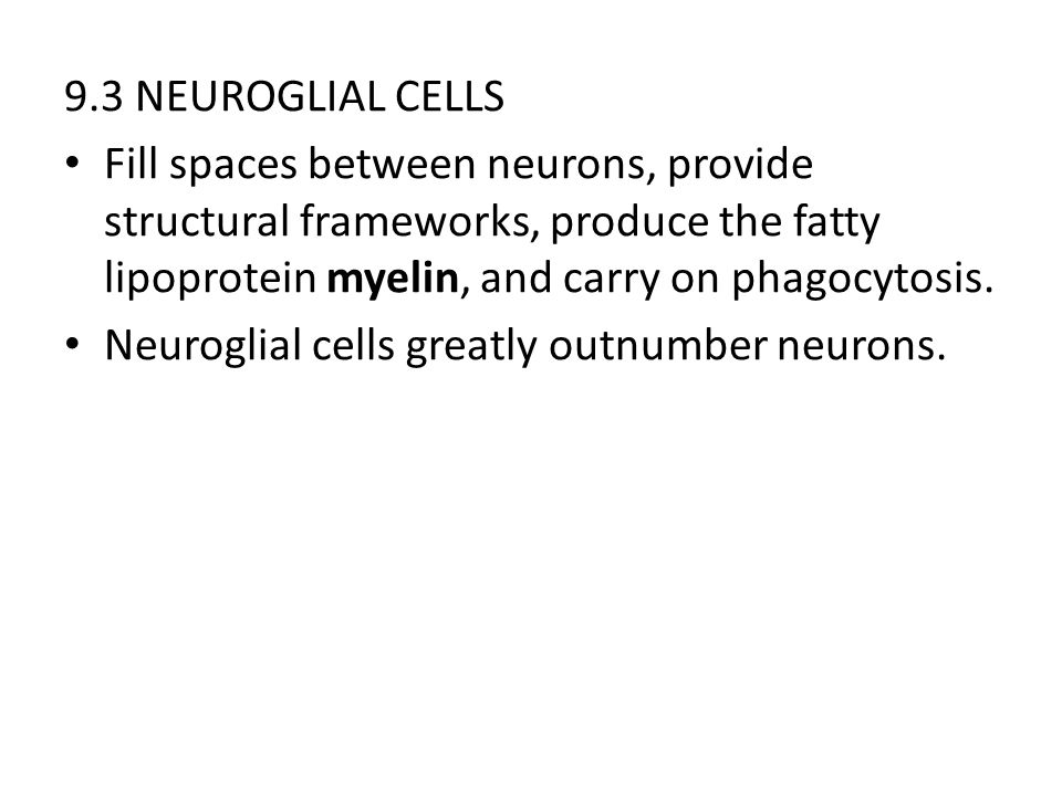 9.3 NEUROGLIAL CELLS Fill spaces between neurons, provide structural frameworks, produce the fatty lipoprotein myelin, and carry on phagocytosis. Neur