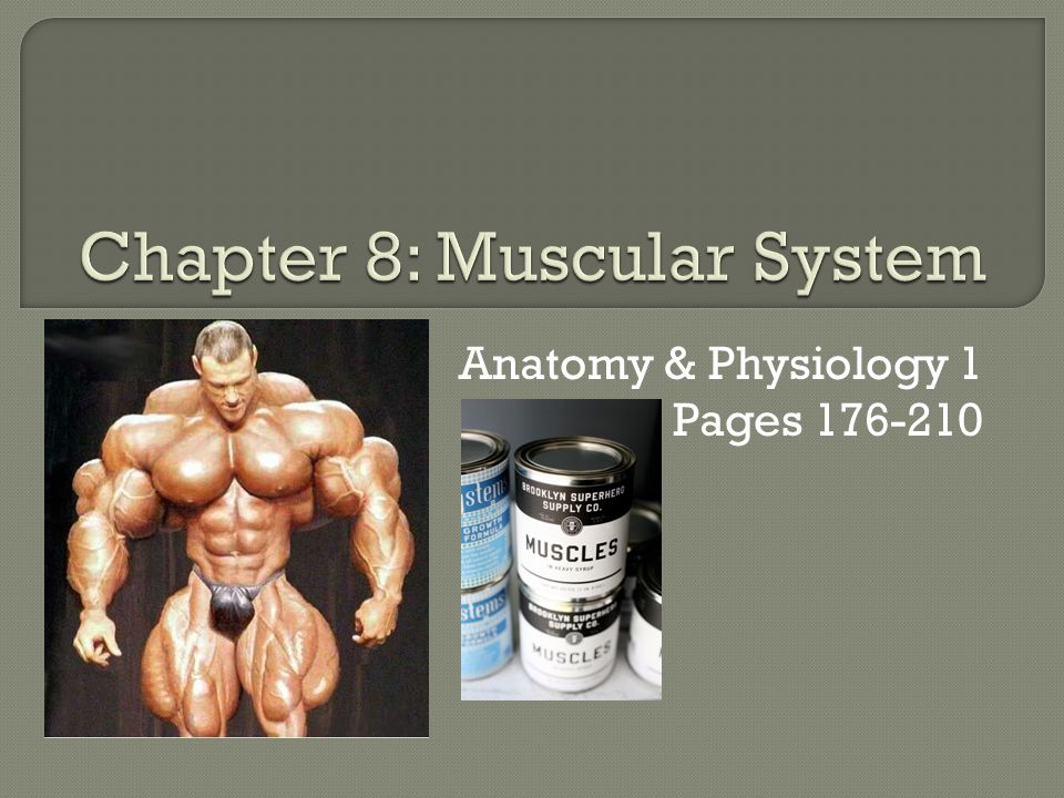 Anatomy & Physiology 1 Pages 176-210