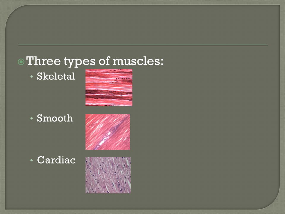  Three types of muscles: Skeletal Smooth Cardiac