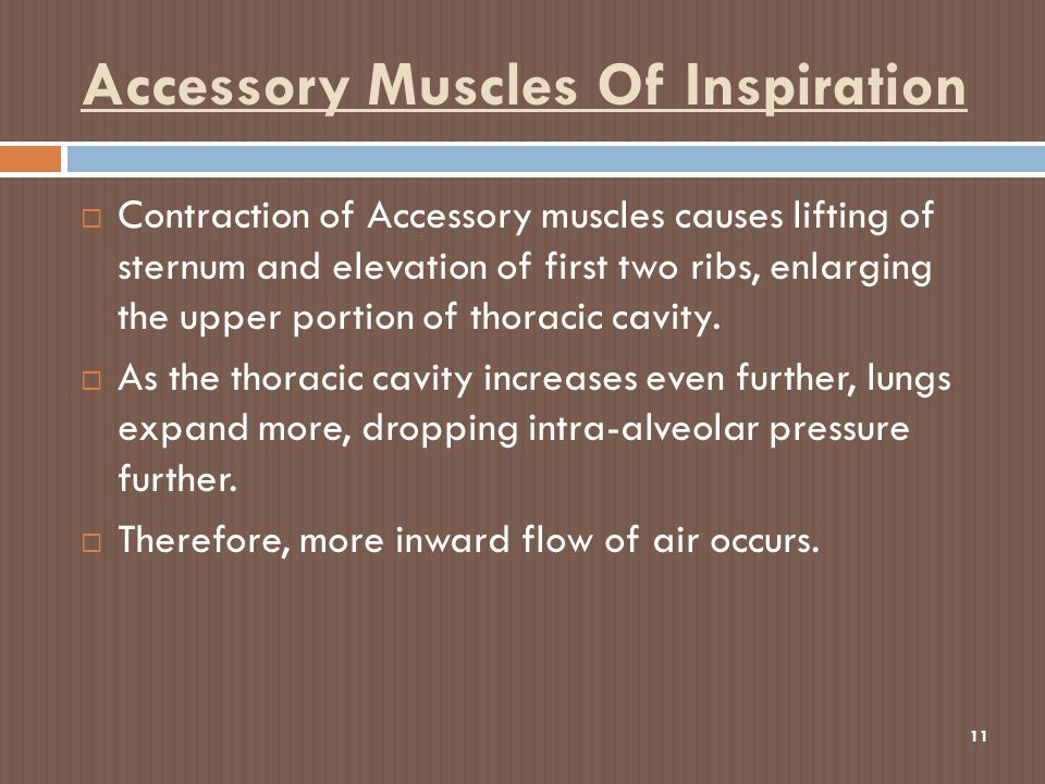 Accessory Muscles Of Inspiration 11  Contraction of Accessory muscles causes lifting of sternum and elevation of first two ribs, enlarging the upper portion of thoracic cavity.