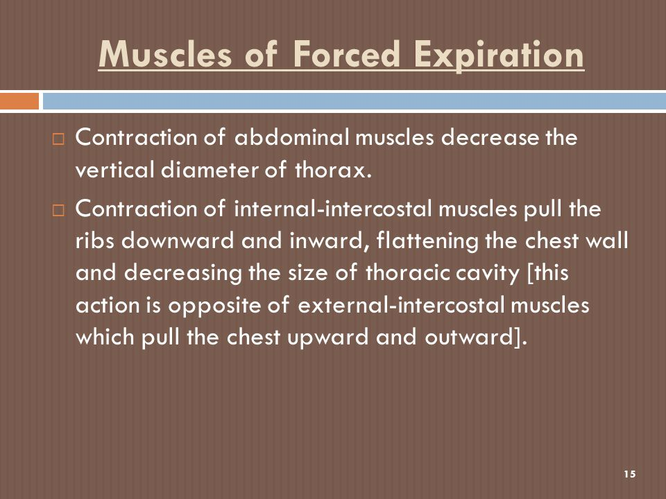 Muscles of Forced Expiration 15  Contraction of abdominal muscles decrease the vertical diameter of thorax.