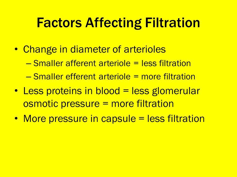 Factors Affecting Filtration Change in diameter of arterioles – Smaller afferent arteriole = less filtration – Smaller efferent arteriole = more filtr