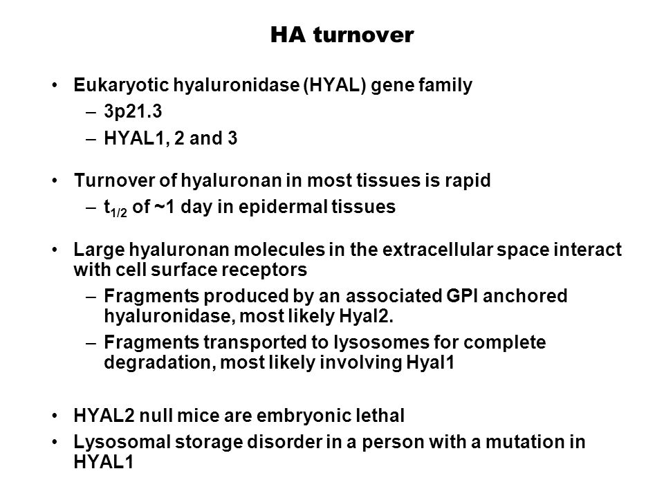 HA turnover Eukaryotic hyaluronidase (HYAL) gene family –3p21.3 –HYAL1, 2 and 3 Turnover of hyaluronan in most tissues is rapid –t 1/2 of ~1 day in epidermal tissues Large hyaluronan molecules in the extracellular space interact with cell surface receptors –Fragments produced by an associated GPI anchored hyaluronidase, most likely Hyal2.