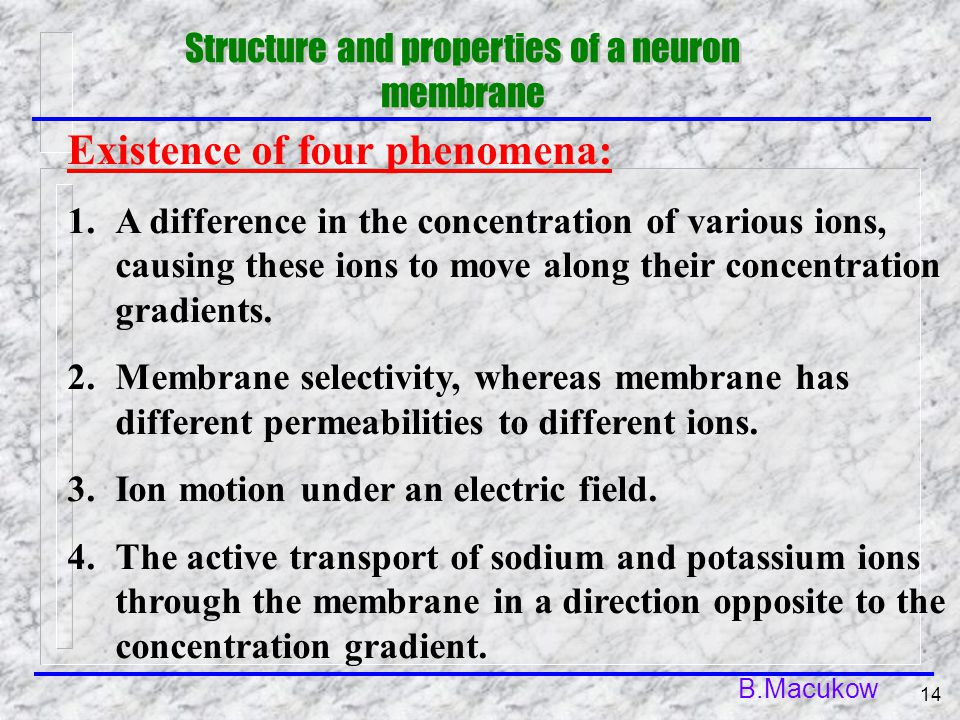 B.Macukow 14 Existence of four phenomena: 1.A difference in the concentration of various ions, causing these ions to move along their concentration gradients.