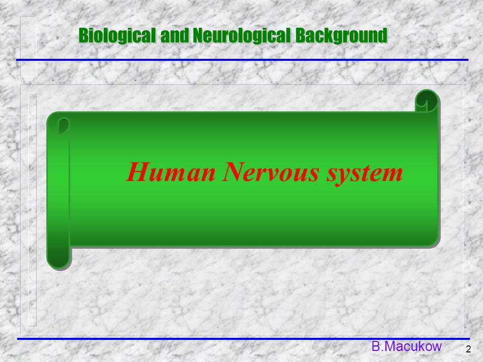 B.Macukow 2 Biological and Neurological Background Human Nervous system