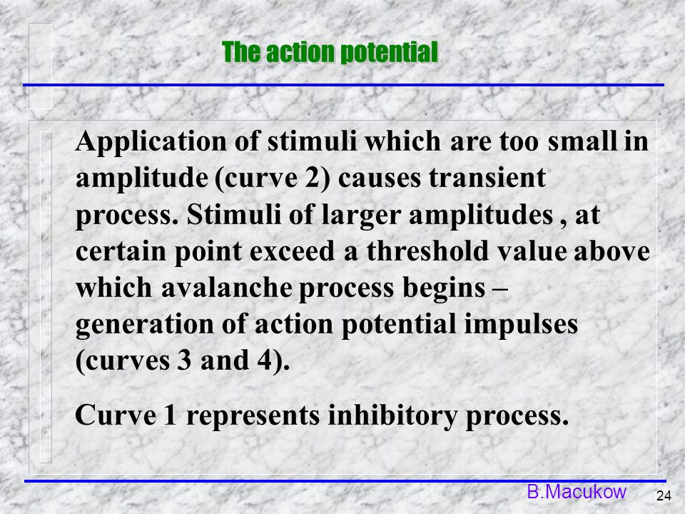 B.Macukow 24 The action potential Application of stimuli which are too small in amplitude (curve 2) causes transient process. Stimuli of larger amplit