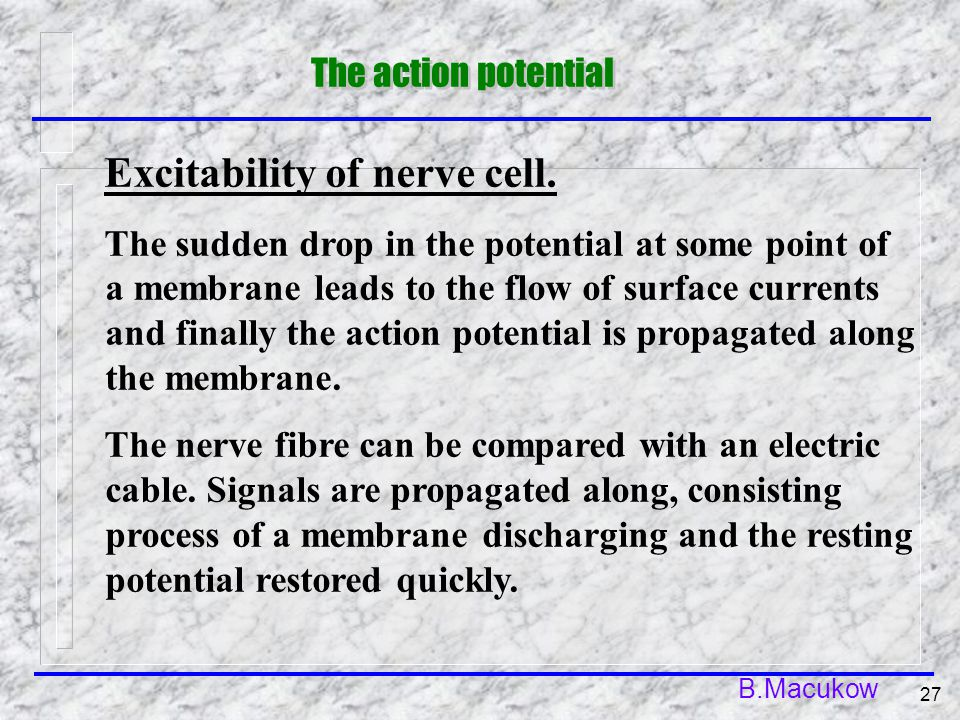 B.Macukow 27 Excitability of nerve cell. The sudden drop in the potential at some point of a membrane leads to the flow of surface currents and finall