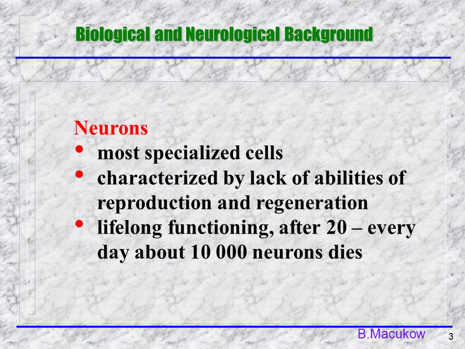 B.Macukow 3 Neurons most specialized cells characterized by lack of abilities of reproduction and regeneration lifelong functioning, after 20 – every day about 10 000 neurons dies Biological and Neurological Background