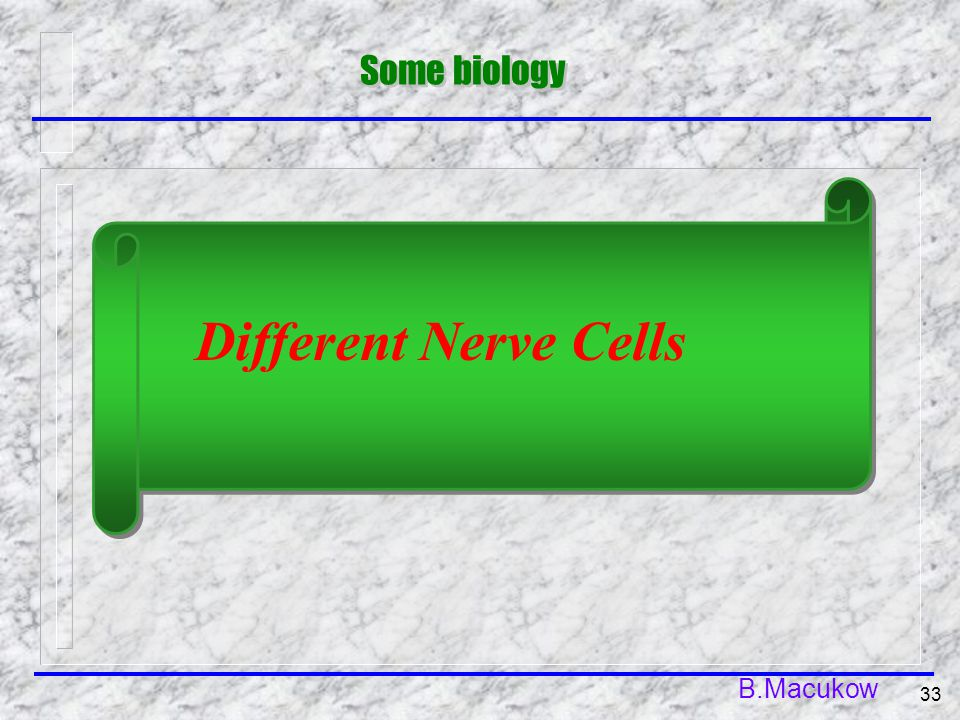 B.Macukow 33 Some biology Different Nerve Cells