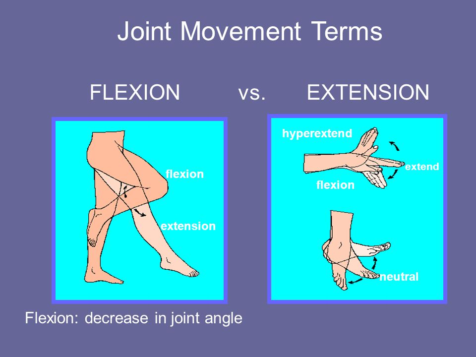 Joint Movement Terms FLEXION vs.