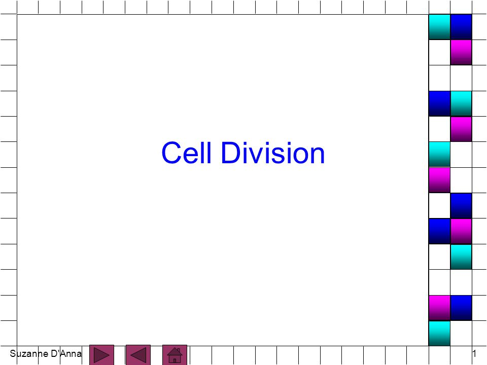 Suzanne D Anna2 Cell Division n process by which cells reproduce themselves n Includes: - nuclear division - cytoplasmic division n Two types: - somatic cell division - reproductive cell division