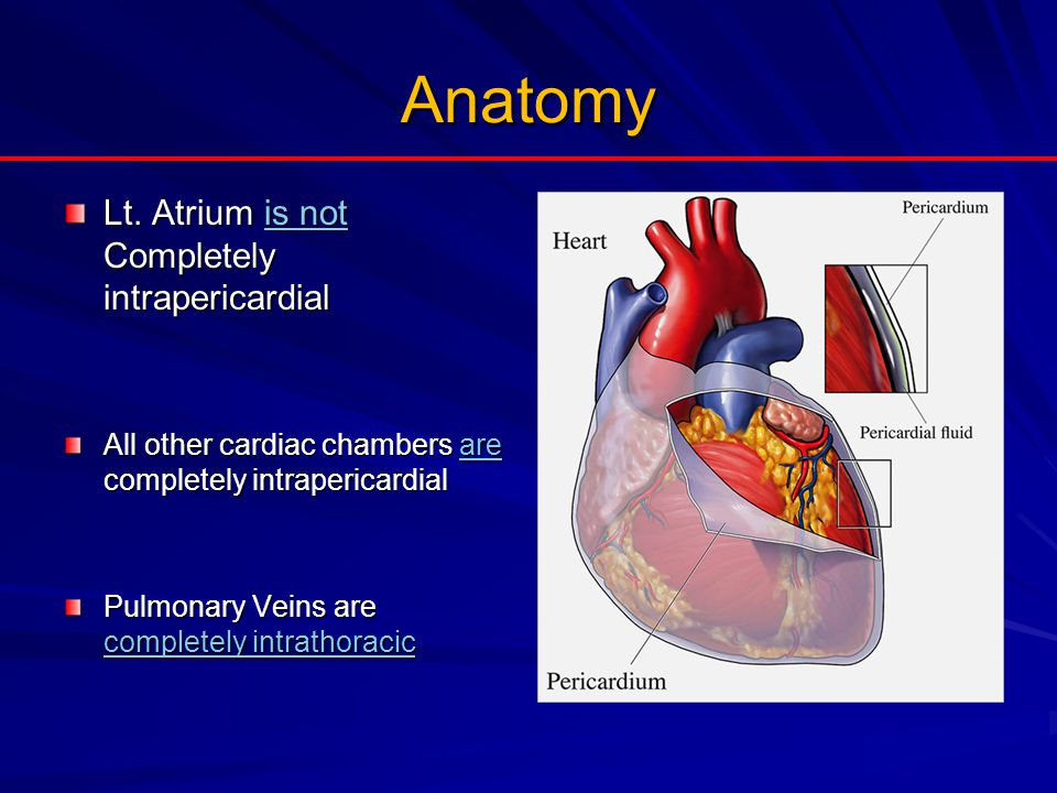 Anatomy Lt. Atrium is not Completely intrapericardial All other cardiac chambers are completely intrapericardial Pulmonary Veins are completely intrat