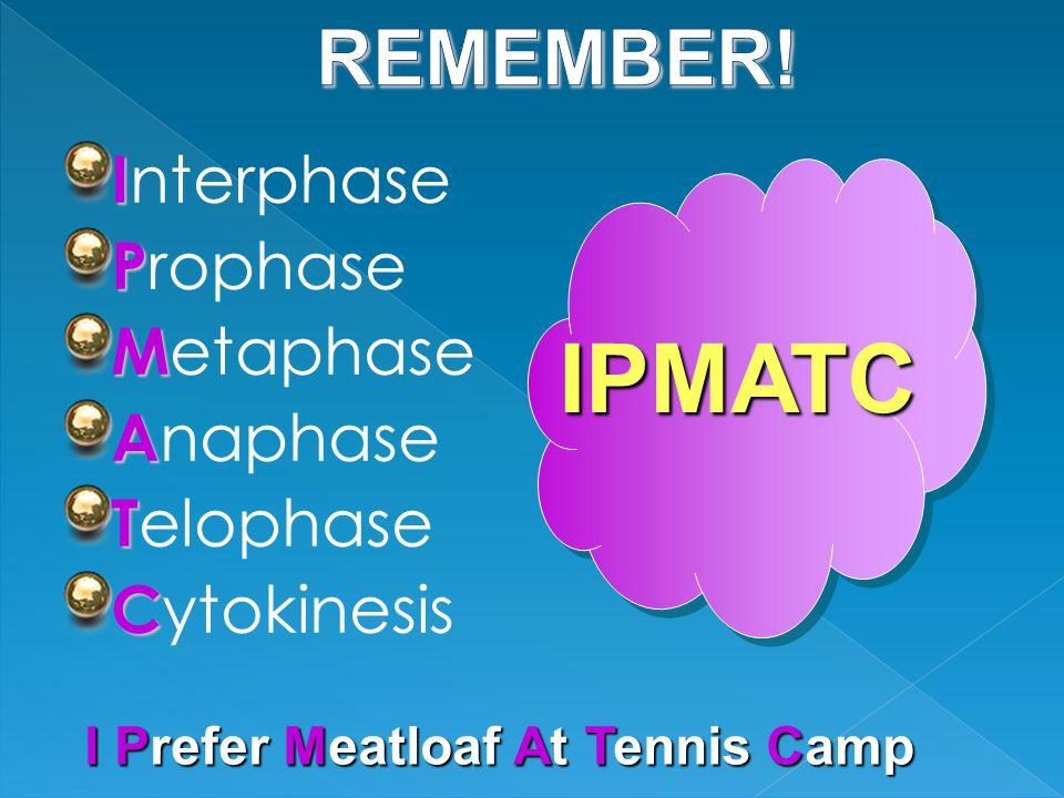 I I nterphase P P rophase M M etaphase A A naphase T T elophase C C ytokinesis IPMATC I Prefer Meatloaf At Tennis Camp