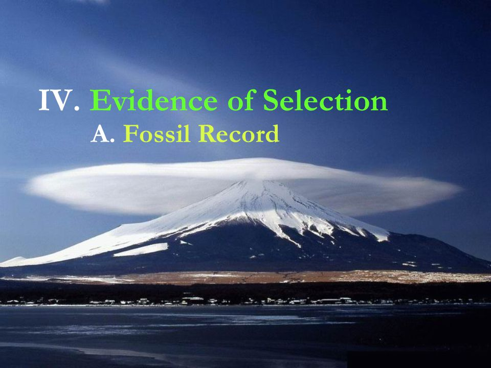 IV. Evidence of Selection A. Fossil Record