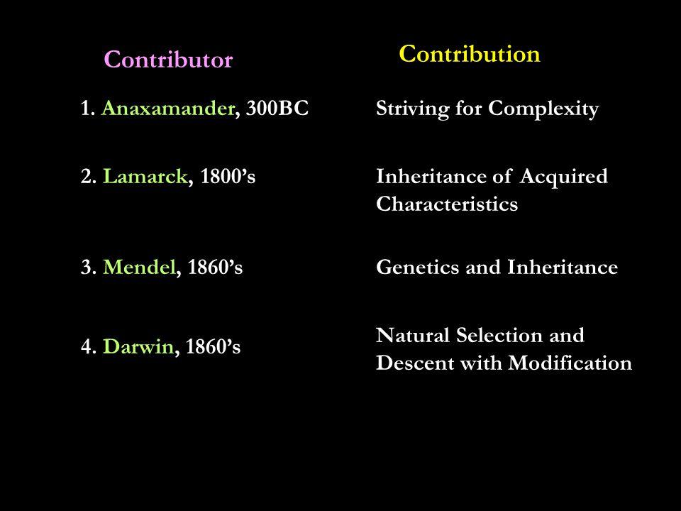 D. Molecular Homology