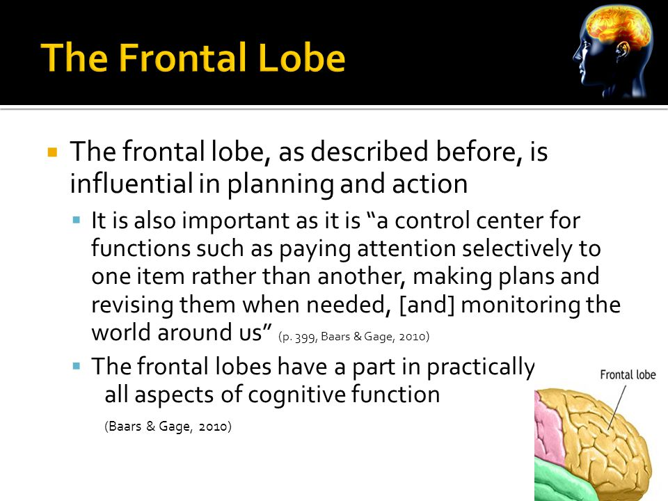  The frontal lobe, as described before, is influential in planning and action  It is also important as it is a control center for functions such as paying attention selectively to one item rather than another, making plans and revising them when needed, [and] monitoring the world around us (p.