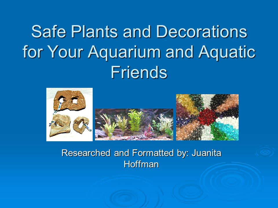 Introduction Before adding any decoration to your aquarium you must take several things into consideration.