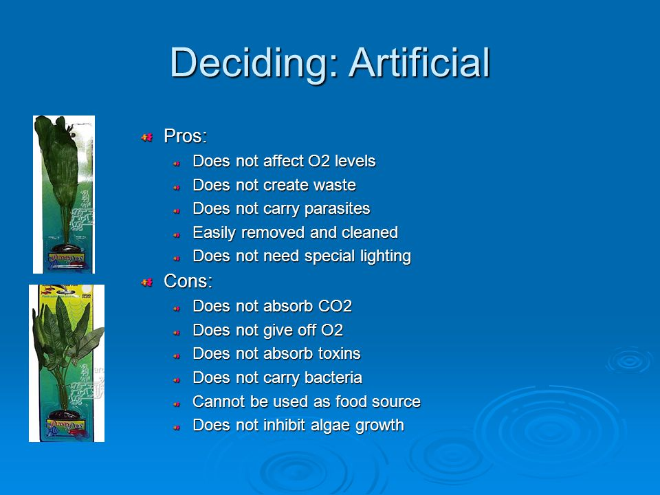 Deciding: Artificial Pros: Does not affect O2 levels Does not create waste Does not carry parasites Easily removed and cleaned Does not need special lightingCons: Does not absorb CO2 Does not give off O2 Does not absorb toxins Does not carry bacteria Cannot be used as food source Does not inhibit algae growth