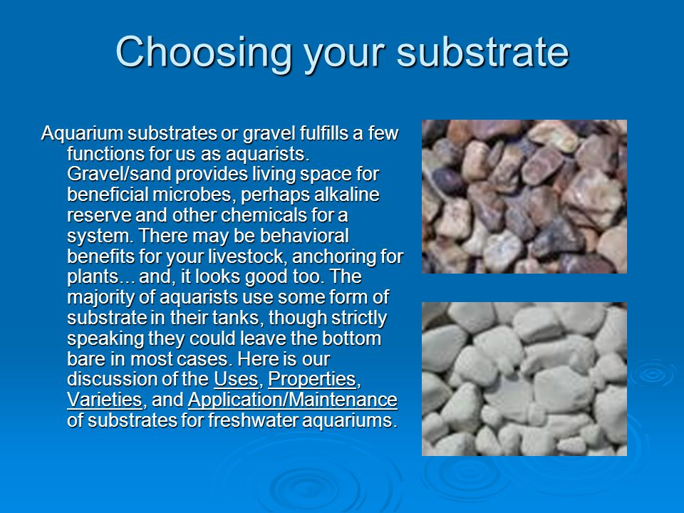 Choosing your substrate Uses: Biological, Buffering, Biomineral, Psychological, Looks Bacteria Homes: Bacteria Homes: First and foremost, gravels, sands and other solid décor in aquariums function to support populations of beneficial bacteria.