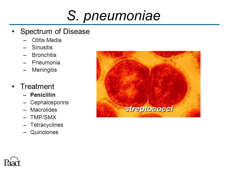 S. pneumoniae Spectrum of Disease – Otitis Media – Sinusitis – Bronchitis – Pneumonia – Meningitis Treatment –Penicillin –Cephalosporins –Macrolides –
