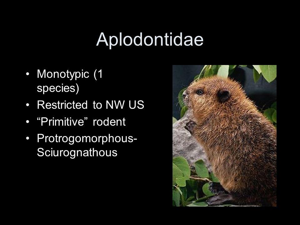 """Aplodontidae Monotypic (1 species) Restricted to NW US """"Primitive"""" rodent Protrogomorphous- Sciurognathous"""