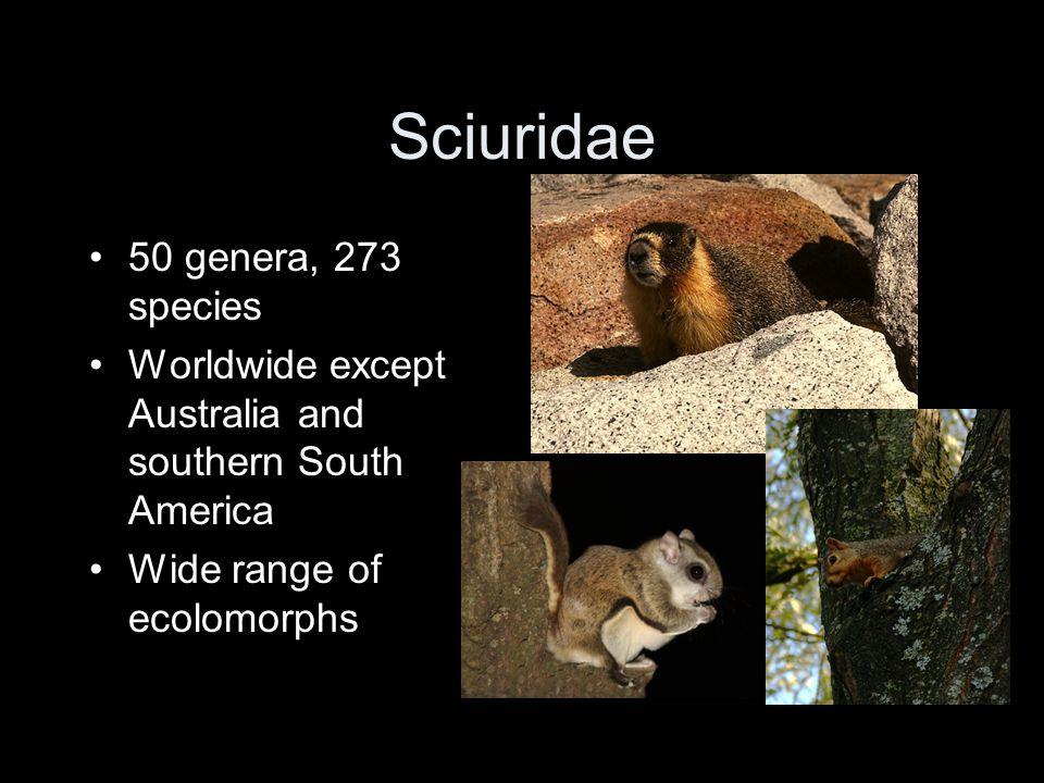 GroundTree Flying Tamias Spermophilus Marmota Sciurus Tamiasciurus Glaucomys Squirrel body plans (N.
