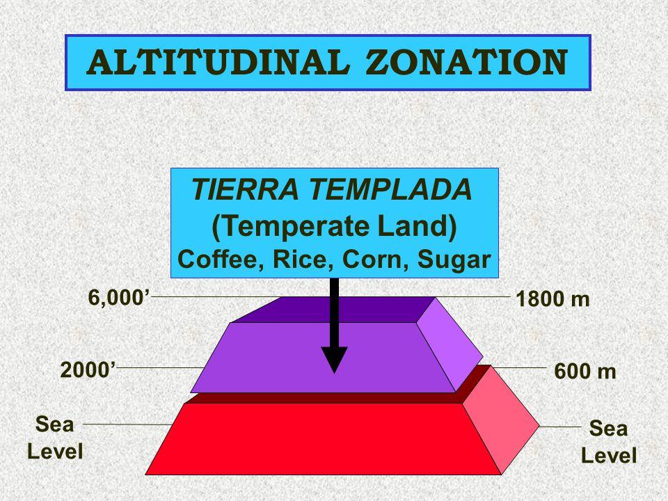6,000' 1800 m ALTITUDINAL ZONATION Sea Level 2000' 600 m Sea Level TIERRA TEMPLADA (Temperate Land) Coffee, Rice, Corn, Sugar
